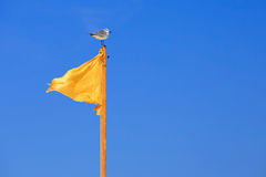 Yellow flag and seagull on blue sky Stock Photos