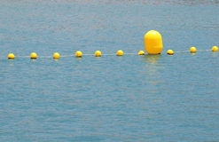 Yellow Floaters Stock Images