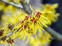 Yellow, Flora, Flower, Spring stock image