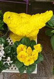 Yellow floral display. Yellow chicken and yellow primula plant in florist shop display in time for Easter and Mother's Day celebrations Stock Photos