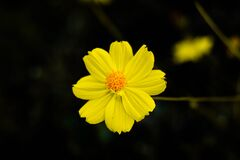 Yellow flowe  background.