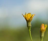 Yellow flower stock image