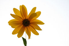Yellow flower. This is a shot of few yellow flower, like nice background Stock Photography