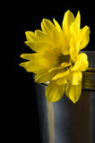 Yellow flower. Beautiful summer. sun and flower Stock Photo