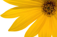 Yellow flower. Beautiful summer. sun and flower Royalty Free Stock Photo