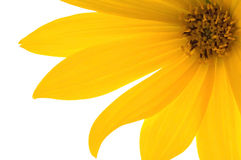 Yellow flower. Beautiful summer. sun and flower Royalty Free Stock Photos