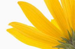 Yellow flower. Beautiful summer. sun and flower Stock Images