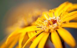 Yellow flower. Beautiful yellow flower in macro shot Stock Photo