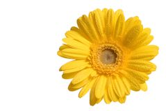 Free Yellow Flower Stock Photography - 1774302