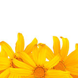 Yellow flower. On white isolated royalty free stock images