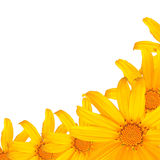 Yellow flower. On white isolated stock photo