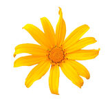 Yellow flower. On white isolated stock images