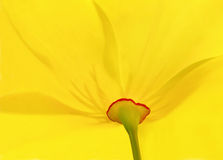Yellow flower Royalty Free Stock Photo
