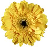 Yellow flower Stock Image