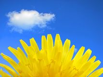 Yellow flower. Stock Photography