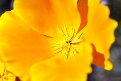Free Yellow Flower Stock Photo - 26759860