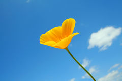 Yellow flower. On a background of sky Royalty Free Stock Photography