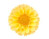 Yellow flower. Flower pattern decoration isolated on the white background Royalty Free Stock Photography