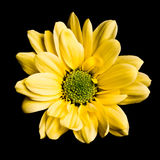 Yellow flower Stock Photography