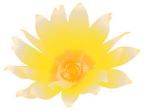Yellow flower. Beautiful summer flower isolated on white (rasterize from vector Stock Photography