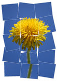 Yellow flower. On a blue sky background puzzled image Stock Photos