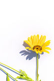 Yellow flower Stock Images