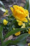 Yellow flower. Garden stock photography