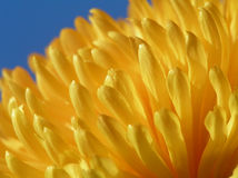 Yellow flower against blue sky. A perspective shot of yellow flower against blue sky stock image
