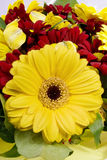 Yellow flower against red flowers. And green leaf Royalty Free Stock Photos