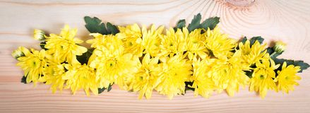 Yellow flower arrange as a line Stock Photography
