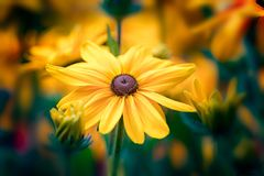 A yellow flower. With yellow background Royalty Free Stock Photo