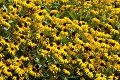 Yellow Flower Background Stock Image