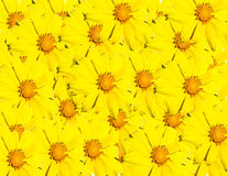 Yellow flower background. Abstract of yellow flower background Stock Images