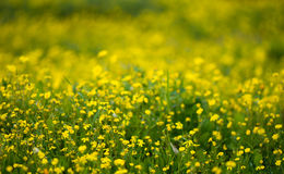 Yellow flower background stock images