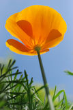Yellow flower. On a background blue sky Royalty Free Stock Image