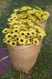 Yellow flower in basket. Royalty Free Stock Photos