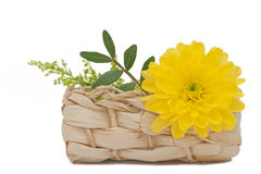Yellow Flower. A Yellow Flower in a Basket, Isolated on White Background Stock Images