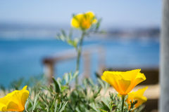 Yellow flower at the beach. Closeup of yellow flowers at the beach Royalty Free Stock Photo