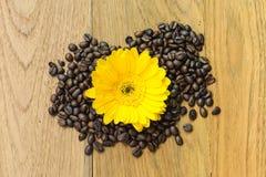 Yellow flower on bean Stock Image