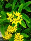 Yellow flower. Beautiful yellow flower Stock Image
