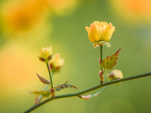 Yellow flower. Beautiful blossom with summer atmosphere Stock Image