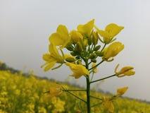 Yellow flower. Beautiful fresh flower stock photo