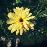 Yellow flower. Beautiful flower in the garden Stock Photo