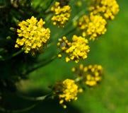 Yellow flower. Beautiful yellow flower. Spring nature Stock Photos