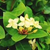 Yellow Flower. Beautiful yellow flower in the wild Stock Photo