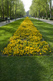 Yellow flower bed Stock Images