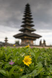 Yellow flower with Beratan temple in the backround Royalty Free Stock Image