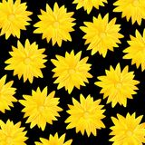 Yellow flower pattern. Yellow flower on black background is insulated Stock Photos