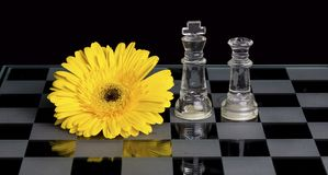 Yellow flower on black and white glass chess board with king and queen. Yellow flower on a black and white glass chess board with king and queen royalty free stock photo