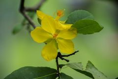 Yellow flower. Blooming in the garden Stock Photos